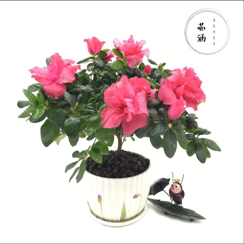 百花村芯涵花卉